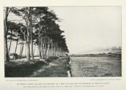 """How the scenery of Bogs may be improved by Tree Planting"" from Irish Gardening Magazine 1910"